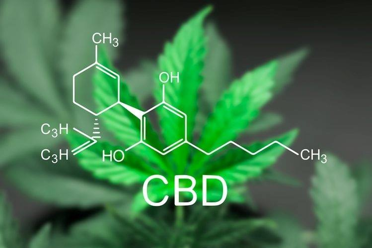 A Treasure Trove of CBD research